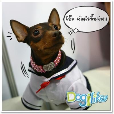 Dogilike.com :: เรียนรู้การสื่อสารของน้องหมาผ่านภาษากาย