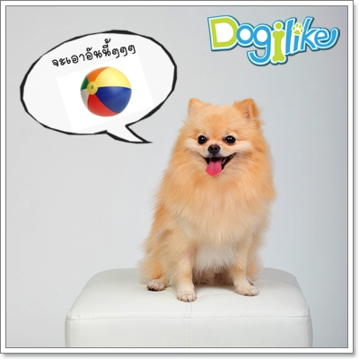 Dogilike.com :: ฝึกน้องหมาให้รู้จักเล่นอย่างถูกวิธี