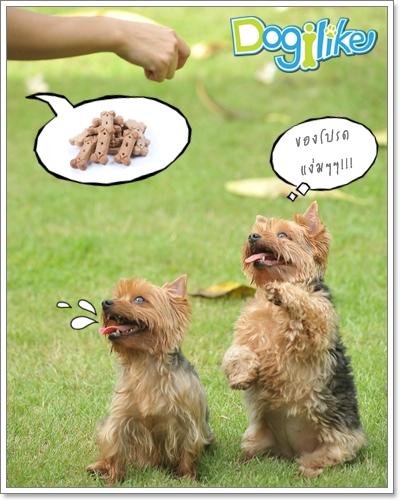 Dogilike.com :: ฝึกการควบคุมพฤติกรรมน้องหมาเวลาเล่น