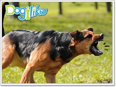 Dogilike.com :: จัดการกับปัญหาน้องหมาหวงอาหาร