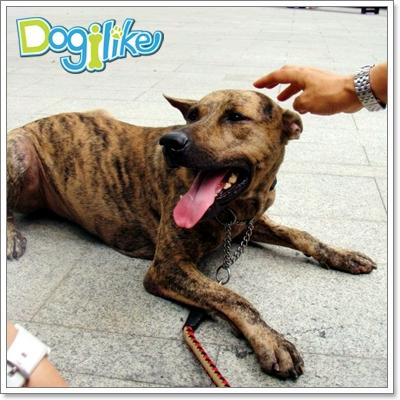 Dogilike.com :: แก้ปัญหาสุนัขทำร้ายเด็กให้ถูกวิธี