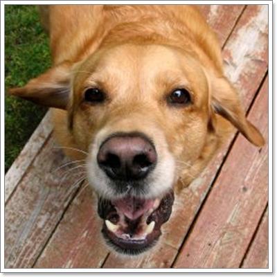 Dogilike.com :: เมื่อสุนัขเห่า เขาต้องการสื่อสารอะไร?