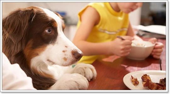 Dogilike.com :: ฝึกพฤติกรรมการกินของสุนัข