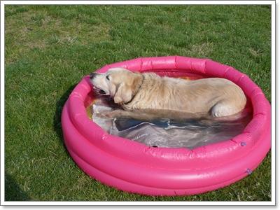 Dogilike.com :: จัดการกับปัญหาน้องหมากลัวน้ำอย่างถูกวิธี