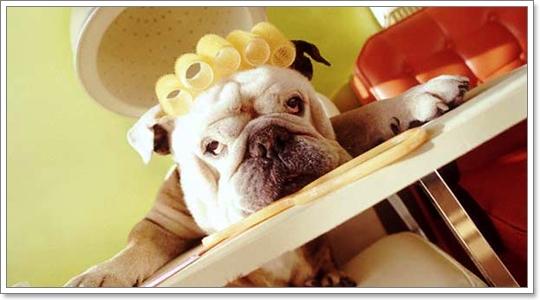 Dogilike.com :: จัดการปัญหาน้องหมากลัวการตัดขน - ตัดเล็บ