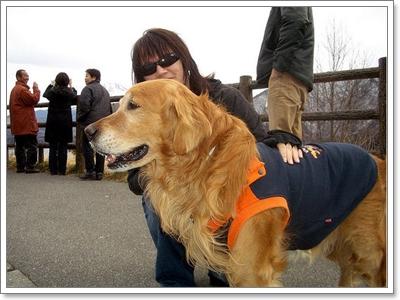 Dogilike.com :: เมื่อเจอน้องหมาแปลกหน้า จะทำความรู้จักเขาได้ยังไง?