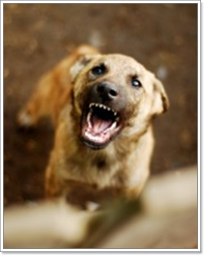 Dogilike.com :: วิธีป้องกันตัวเองเมื่อโดนคุกคามจากน้องหมาแปลกหน้า