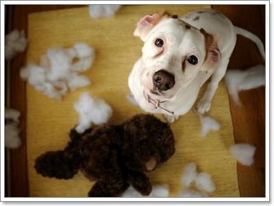 Dogilike.com :: ทำความเข้าใจพฤติกรรม แม่สุนัข - ลูกสุนัขแรกคลอด