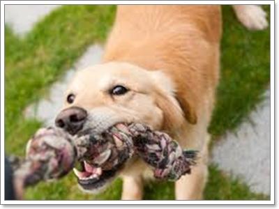 Dogilike.com :: ใช้โทนเสียงอย่างไรในการฝึกสุนัข