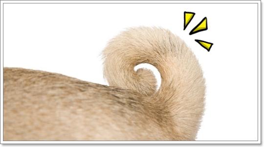 Dogilike.com :: หางน้องหมา ... เรดาร์ บอกอารมณ์