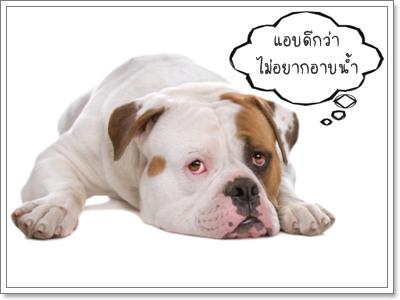 Dogilike.com :: ฝึกนิสัยน้องหมาให้ไม่กลัวการอาบน้ำ