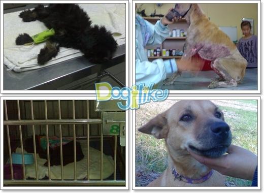 Dogilike.com :: โครงการปันน้ำใจสู่ ... เพื่อนรักแสนรู้