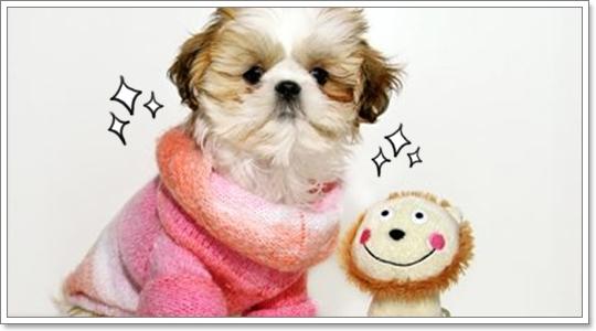 Dogilike.com :: Ὺ�������˹�Ǣͧ��ͧ���