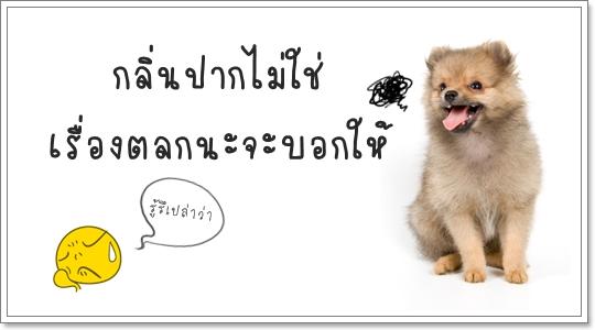 Dogilike.com :: ปริทันต์ โรคร้ายที่(อาจ)เกิดในช่องปากสุนัข
