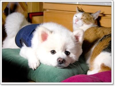 Dogilike.com :: ดูแลหัวใจสุนัขให้ดี ... มารู้จักโรคหัวใจในสุนัขกัน