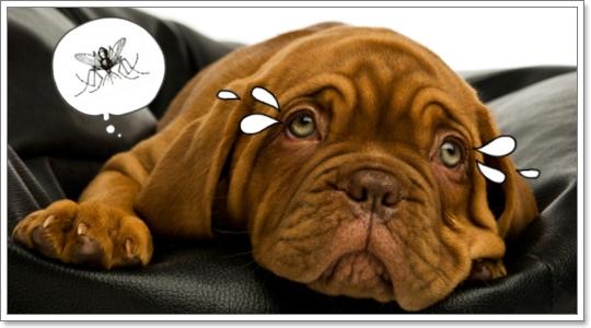 Dogilike.com :: รู้ทันโรคพยาธิหนอนหัวใจในสุนัข