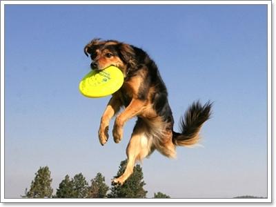 Dogilike.com :: 3 อาการอันตรายที่มักเกิดขึ้นกับน้องหมาในหน้าร้อน