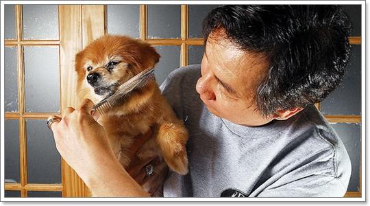 Dogilike.com :: Hot Spot โรคผิวหนังที่อาจเกิดกับสุนัขในหน้าร้อน