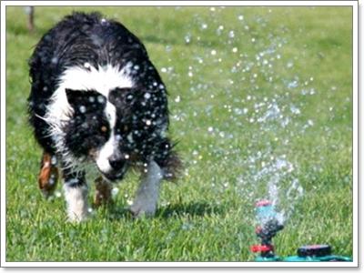Dogilike.com :: 6 วิธีง่ายๆ คลายร้อนให้น้องหมา