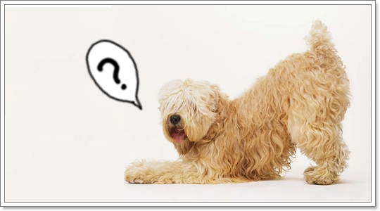 Dogilike.com :: จำเป็นไหม ต้องตัดขนน้องหมาในหน้าร้อน?