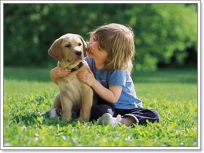 Dogilike.com :: เลือกเลี้ยงสุนัขยังไงให้เหมาะกับไลฟ์สไตล์ของเรา