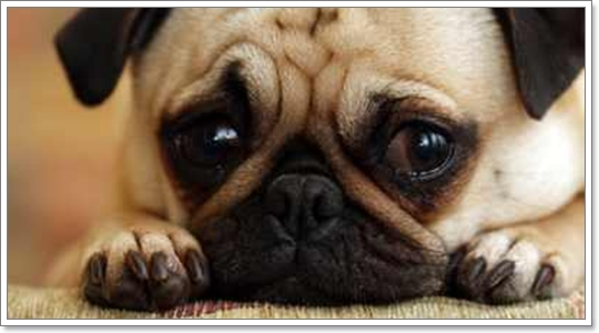 Dogilike.com :: 4 นิสัย ของลูกสุนัขที่ต้องแก้ไข