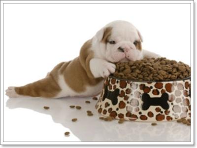 Dogilike.com :: วางแผนการให้อาหารลูกสุนัขมาใหม่อย่างถูกวิธี
