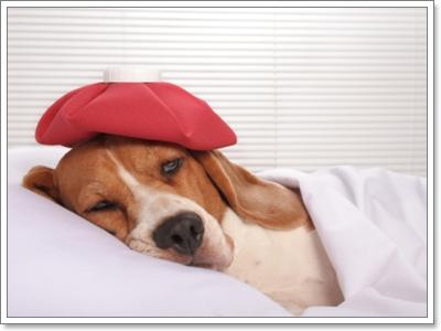 Dogilike.com :: สัญญาณอะไรบ้างที่บอกคุณว่า น้องหมากำลังเครียด