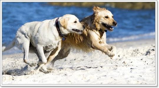 Dogilike.com :: ดูแลประสาทสัมผัสทั้ง 4 ของสุนัขอย่างถูกวิธี