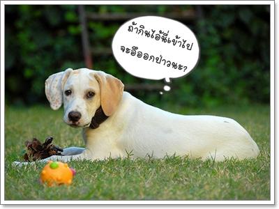 Dogilike.com :: น้องหมาท้องผูกทำยังไงดี?