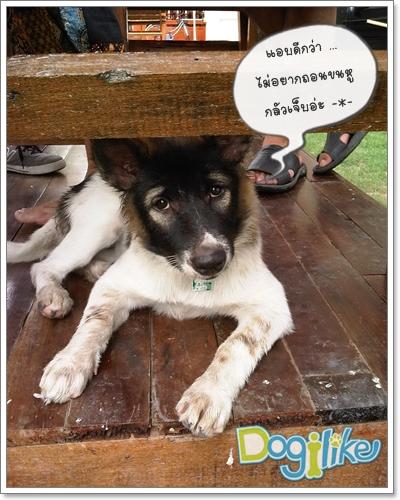 Dogilike.com :: ทำความสะอาดหูให้น้องหมา ก่อนโรคถามหา ...