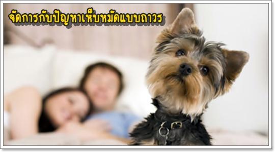 Dogilike.com :: ยากำจัดเห็บหมัดแบบครบวงจร