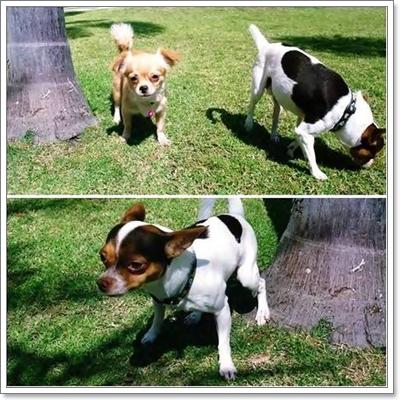 Dogilike.com :: กางเกงอนามัยและโอบิสำหรับสุนัข