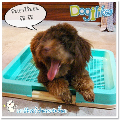 Dogilike.com :: REVIEW : ��ͧ�������Ѻ�عѢ