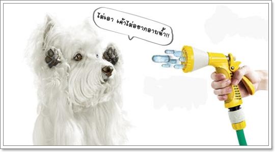 Dogilike.com :: สเปรย์อาบน้ำสุนัข