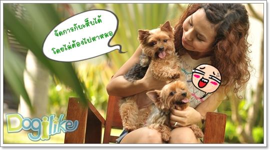 Dogilike.com :: ยาหยดกำจัดเห็บหมัด