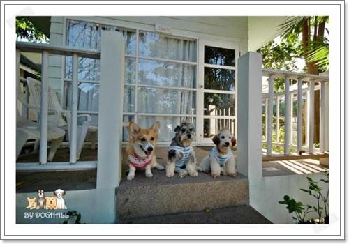 Dogilike.com :: REVIEW : พาน้องหมาไปพักไปเที่ยวทะเลหัวหินกัน