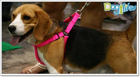 Dogilike.com :: บรรยากาศ  FCI Dog Show 2010