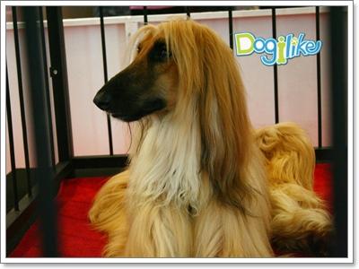 Dogilike.com :: บรรยากาศ Dog community party 2010
