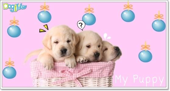 Dogilike.com :: การเลือกซื้อลูกสุนัข