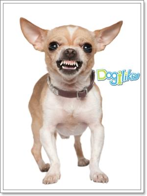 Dogilike.com :: �ä����عѢ��� �ѹ���������