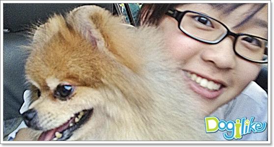 Dogilike.com :: การดูแลปอมเมอเรเนียน (ฉบับน้องแพรว)