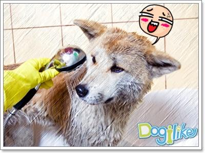 Dogilike.com :: สิ่งต้องระวังตอนอาบน้ำสุนัข