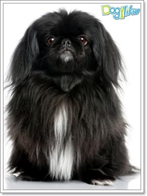 Dogilike.com :: การดูแลลูกสุนัขพันธุ์เล็ก