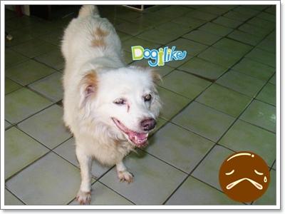 Dogilike.com :: สมองเสื่อมในสุนัข