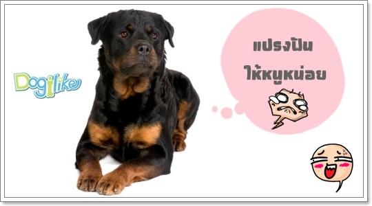 Dogilike.com :: �ѹʡ�á ���˵��ä�����ҡ���
