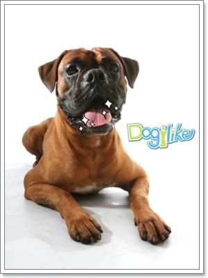 Dogilike.com :: ฟันสกปรก สาเหตุโรคร้ายมากมาย