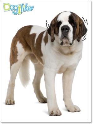 Dogilike.com :: มาดูแลหูน้องหมากัน