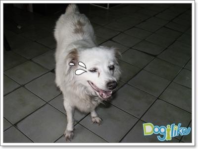 Dogilike.com :: สังเกตสุนัขแก่