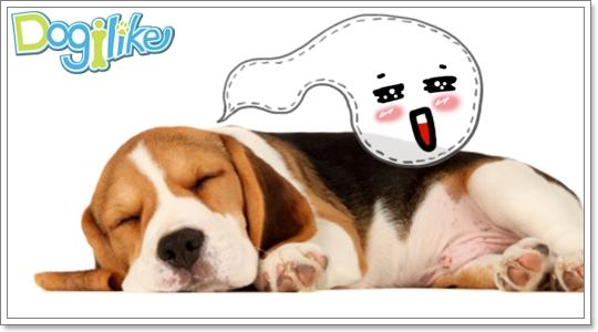 Dogilike.com :: หมาหอนเพราะเห็นผี ?